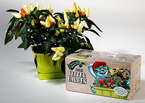 Copy of Children Pepper Garden kit, Planter Pepper comes with Organic Pepper Seeds, Coloring Planter Case & Markers