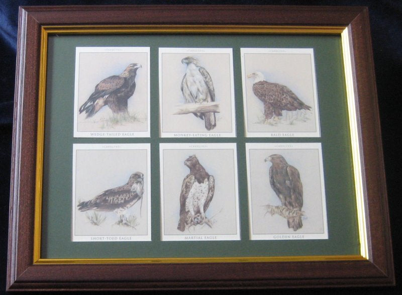 Mounting & framing Kit for 6 Large Cigarette Cards