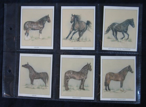Cigarette Card Album Spare Pages (6 Section)