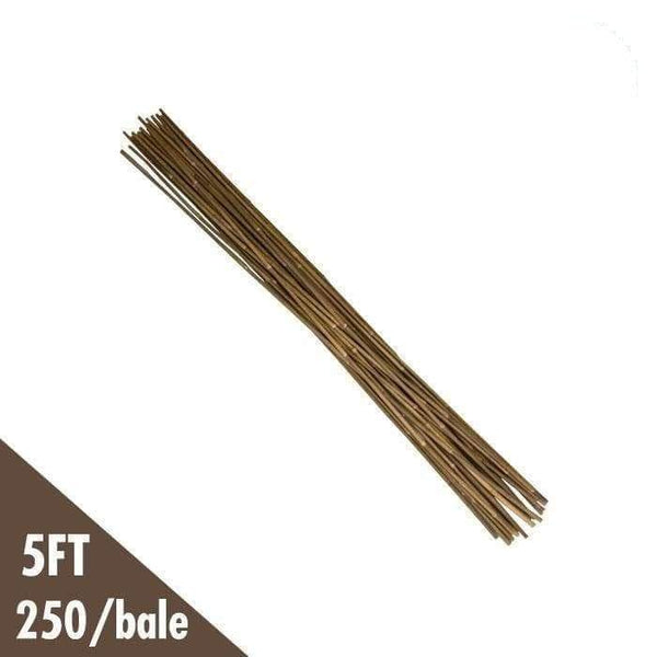 DL Wholesale Bamboo 5' Natural Bamboo Stakes Bulk (250/bale)