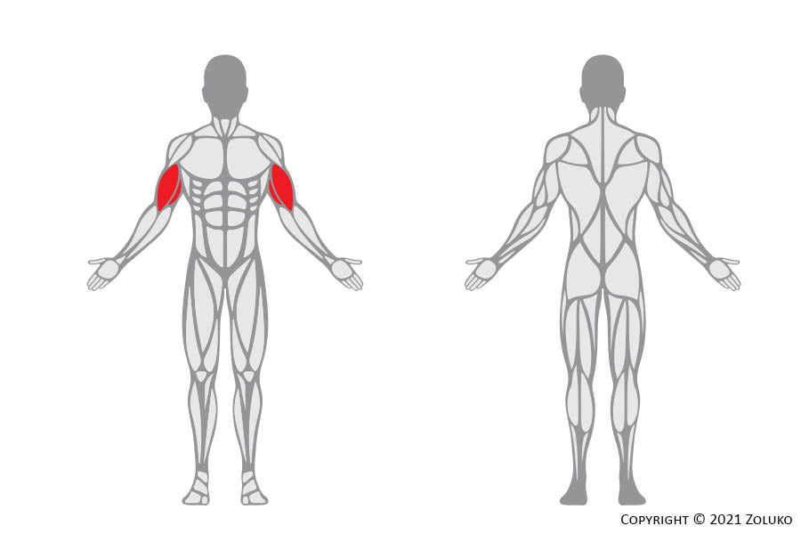 Biceps Cable Curl - Fitness Oefening - Welke Spieren - Anatomie