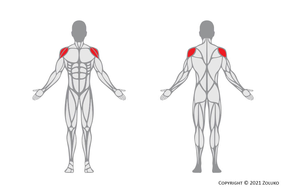 Cable Lateral Raise - Fitness Oefening - Welke Spieren - Anatomie