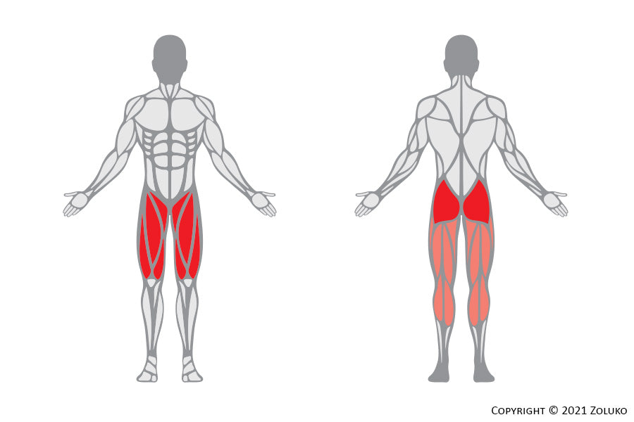 Cable Squat - Fitness Oefening - Welke Spieren - Anatomie