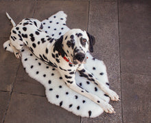 Load image into Gallery viewer, DALMATION