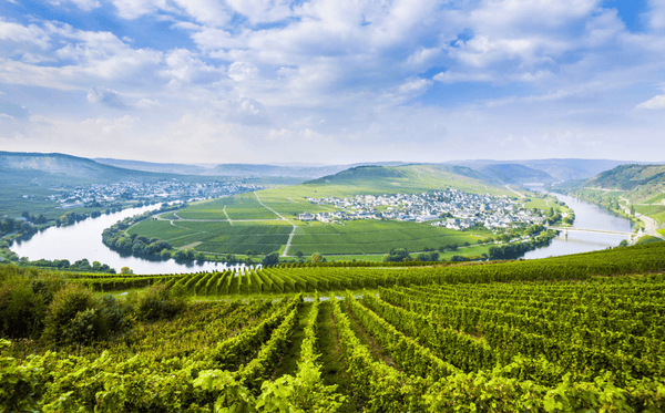 Wines of Germany - picture of Mosel vineyards