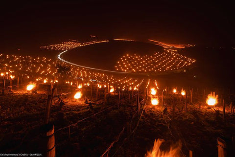 """View of Chablis vineyards during the night with lighted """"candles"""""""