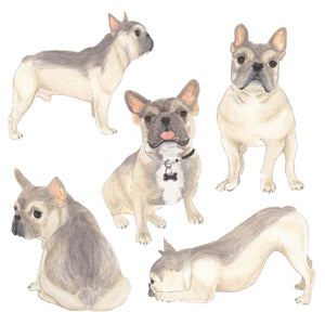 Personalized Blue Fawn Tricolor French Bulldog Fine Art Prints