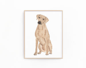 Personalized Rhodesian Ridgeback Fine Art Prints