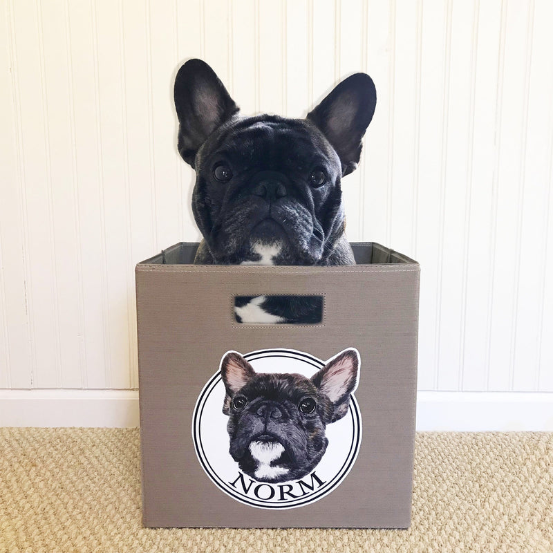 Blue Fawn Tricolor French Bulldog Storage Bin