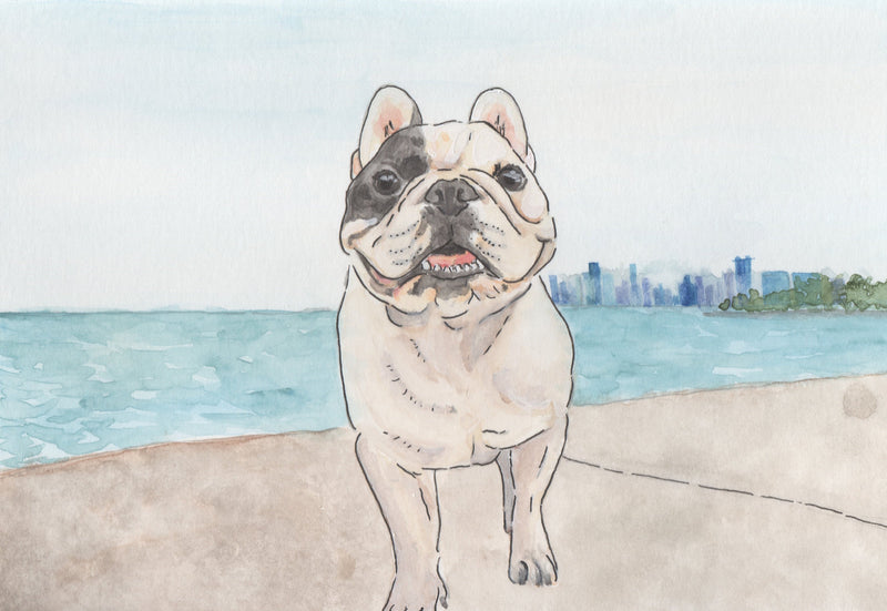 Chicago French Bulldog Rescue Fundraising Artwork