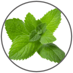 A Group of peppermint leaves