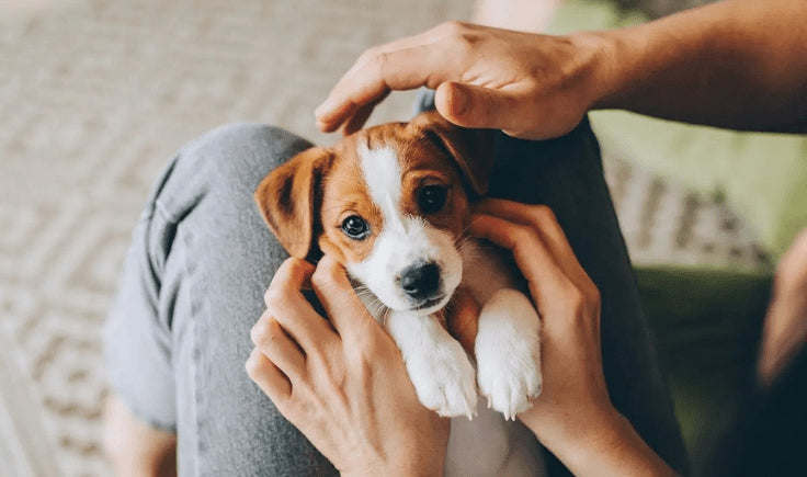 a puppy in the arms of a man