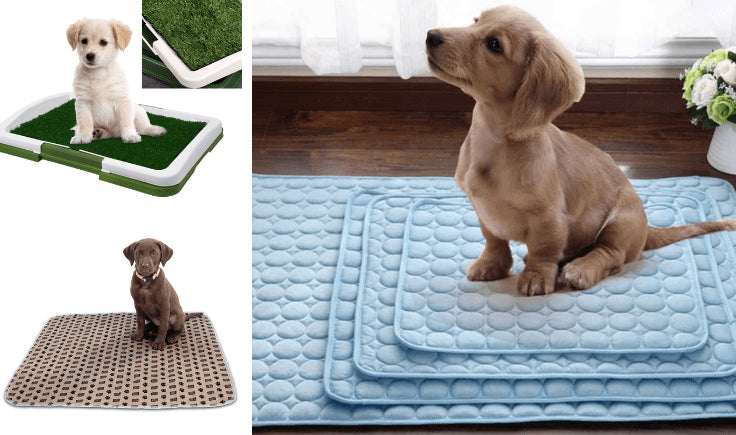 absorbent house training pads for dogs