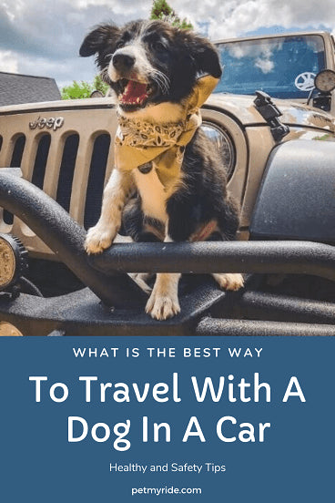 traveling with your dog in the car