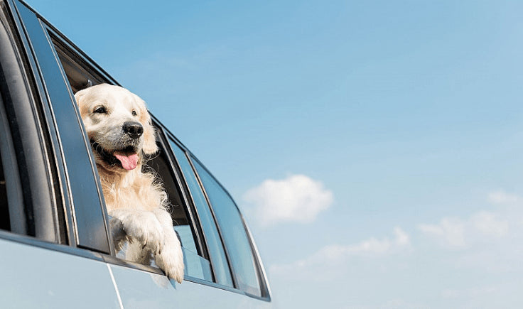 conditioning your dog to car trips