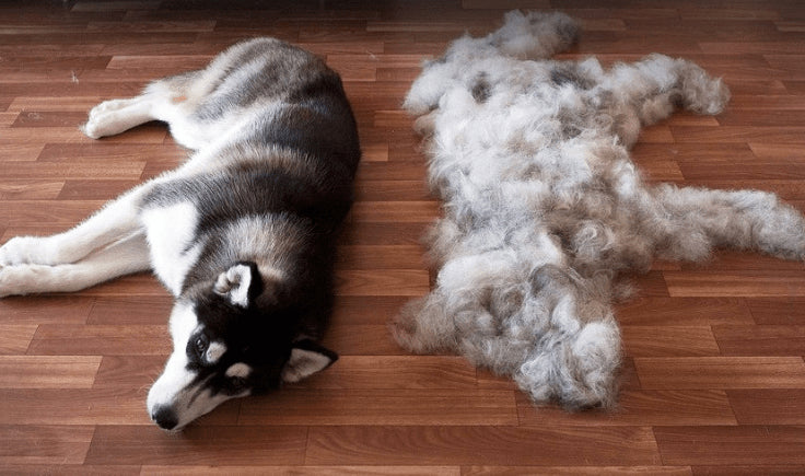 dog hair prevention brush your dog before rides