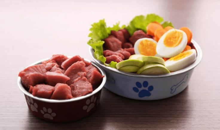 Feed your Dog an Appropriate Diet