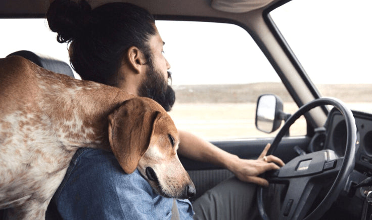 how to help dogs with motion sickness