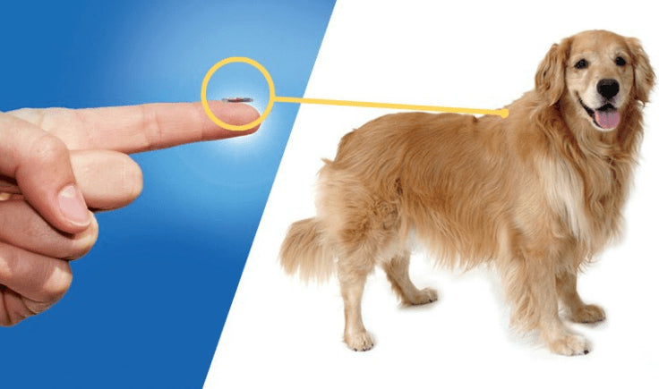 microchip for large dogs