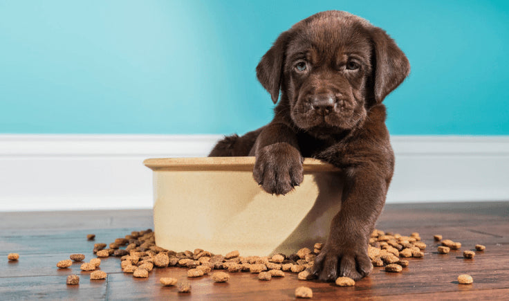 new puppy checklist food and nutrition