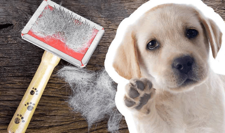 new puppy checklist hygiene and cleaning