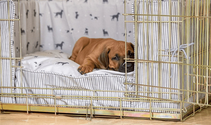 the puppy lying on a pillow in a crate