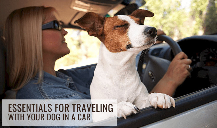 essentials tips for traveling with your dog in a car