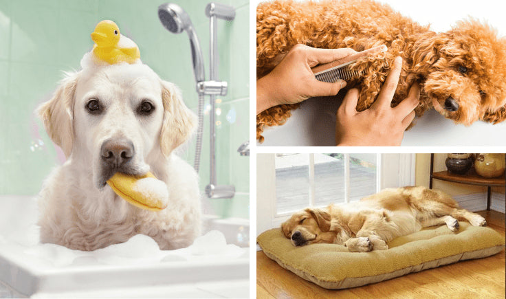 tips to contain your large hypoallergenic dogs