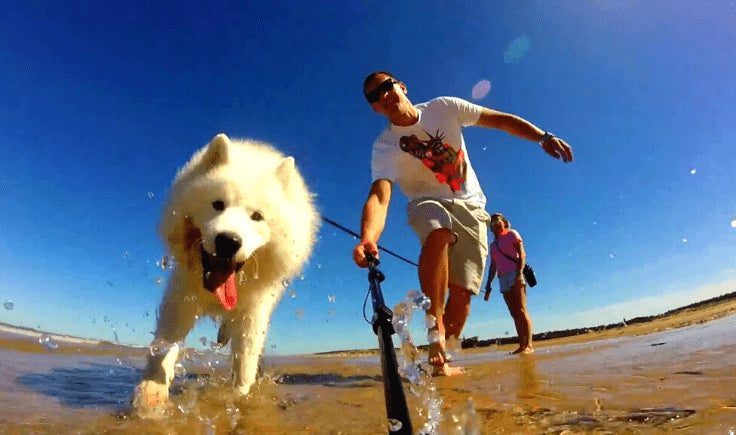 Traveling with Your Hypoallergenic Large Dog