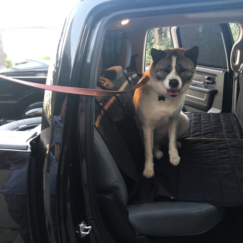 longest living large dog breeds - akita at the back car seat cover of the truck