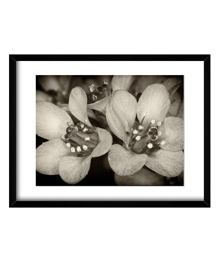 cuadros flowers in the dark 2, talla 40 x 30