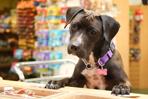 dog picking out treat at treat bar at Paw Hana Pet Supply store