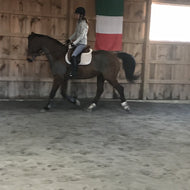 2 week package- Dressage- Winter Riding Bootcamp- Sunday Jan 31 and Feb 28 1:30pm