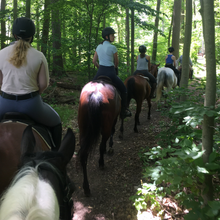 Load image into Gallery viewer, horseback riding new york