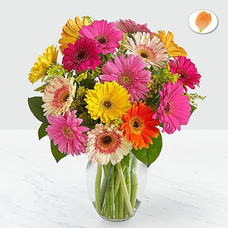 Colorful World Gerbera - Flores 24 Horas