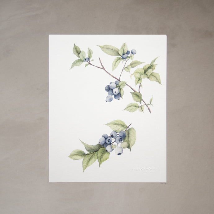 Blueberries Botanical Watercolor Artprint