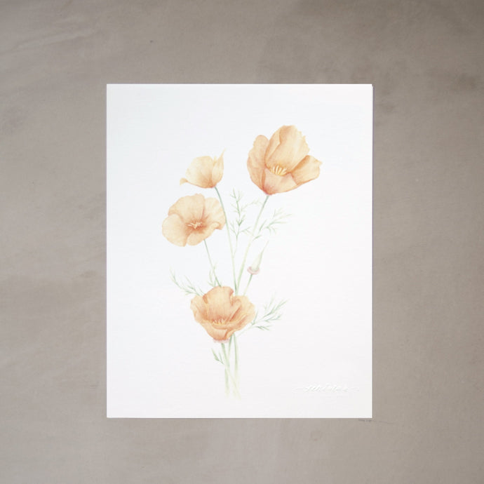California Poppies Botanical Watercolor Artprint