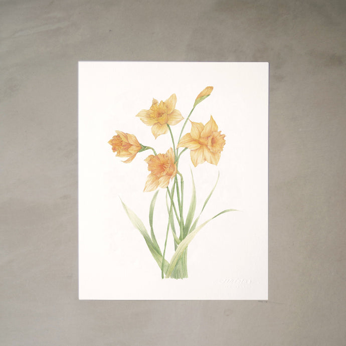 Daffodils Botanical Watercolor Artprint