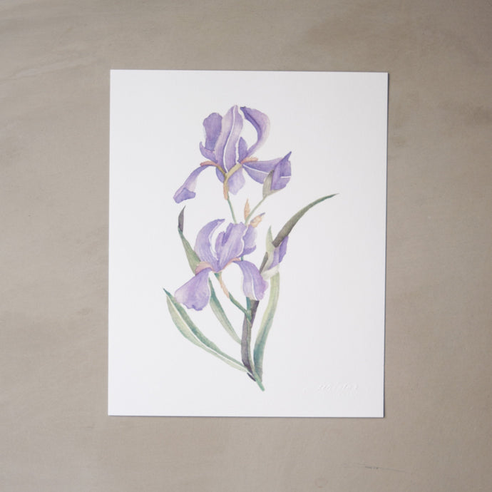 Iris Botanical Watercolor Artprint