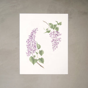 Lilacs Botanical Watercolor Artprint