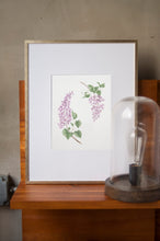Load image into Gallery viewer, Lilacs Botanical Watercolor Artprint
