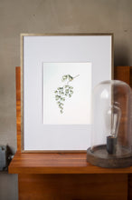 Load image into Gallery viewer, Maidenhairs Botanical Watercolor Artprint 02