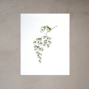 Maidenhairs Botanical Watercolor Artprint 02