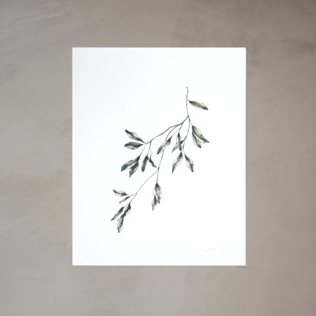 Olive Branch Botanical Watercolor Artprint 01