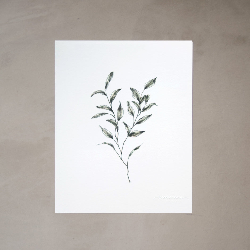 Olive Branch Botanical Watercolor Artprint 02