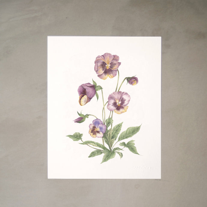 Pansies Botanical Watercolor Artprint