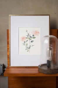 Rose Botanical Watercolor Artprint