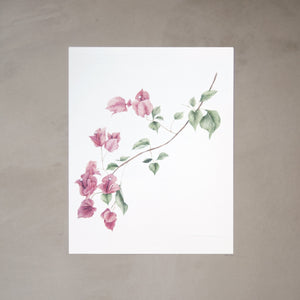 Bougainvillea Botanical Watercolor Artprint