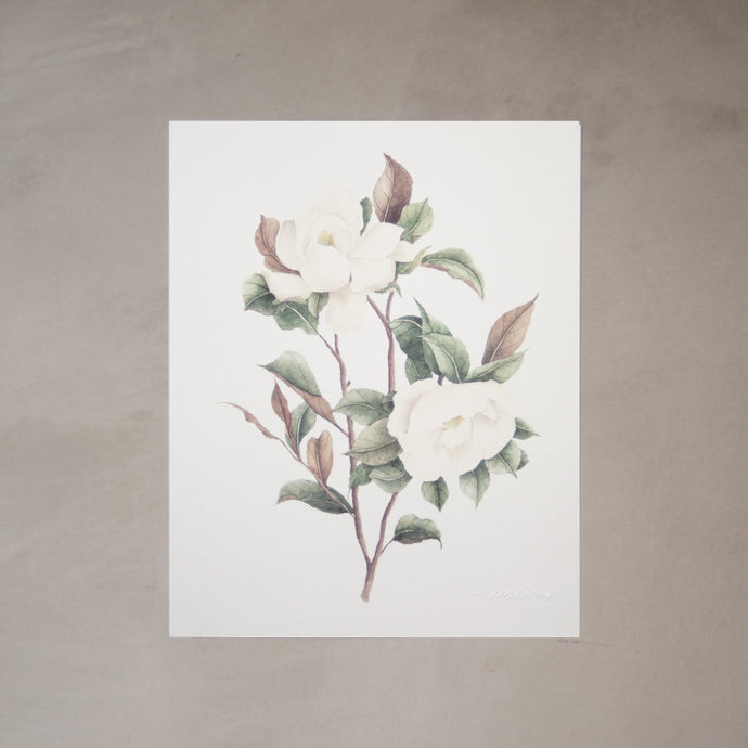 Southern Magnolia Botanical Watercolor Artprint