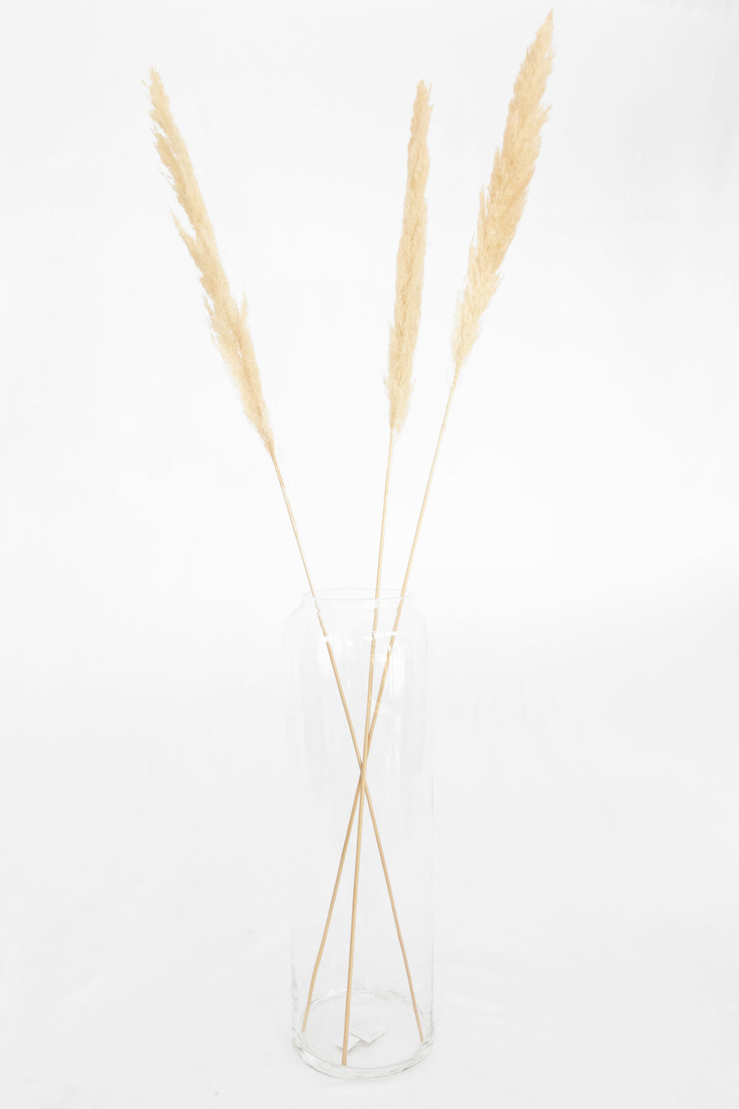 ODL Pampas Grass - Large - Pack of 3